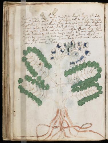 Voynich 47