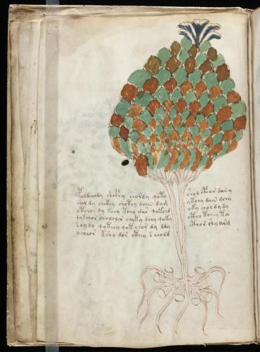 Voynich 49