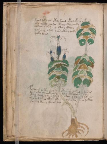 Voynich 52