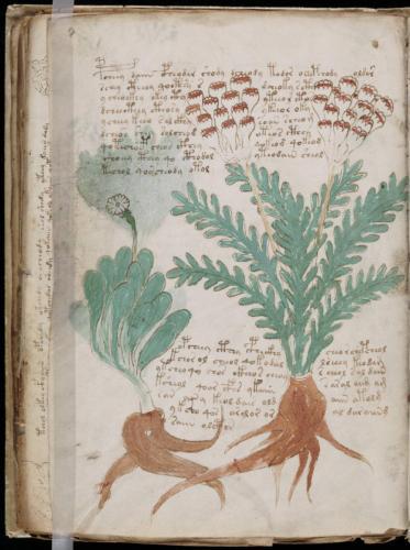 Voynich 58