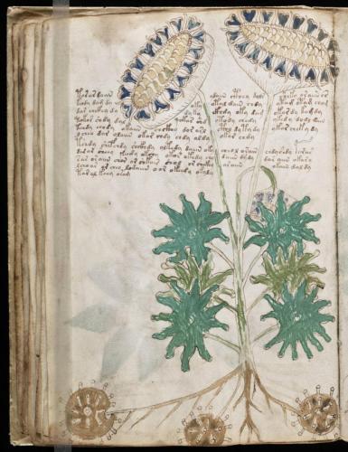 Voynich 59