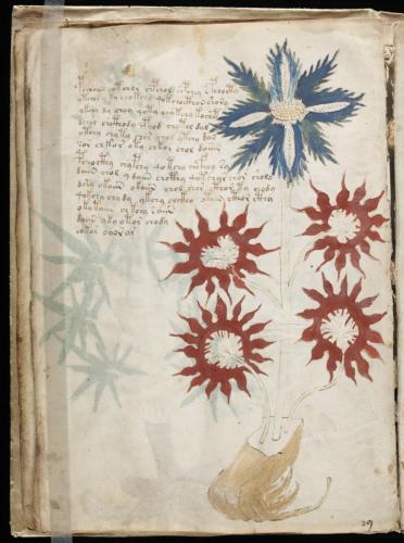 Voynich 61