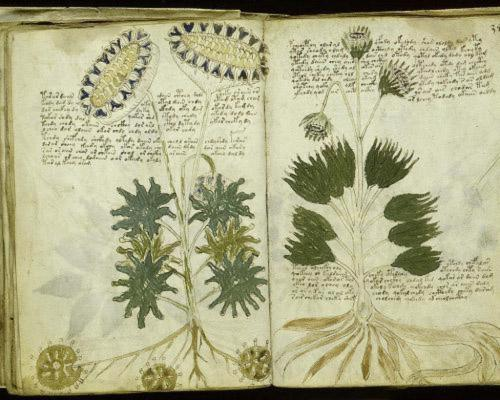 Voynich 63