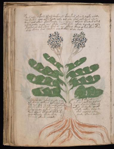 Voynich 65