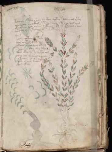 Voynich 66